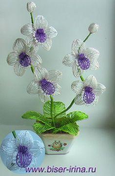 Orhideya.jpg (313×480)