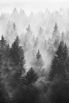 A dark, misty forest. #wallpaper #phonewallpaper
