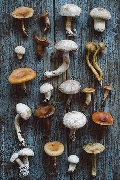 Mushroom pattern By BrkatiKrokodil