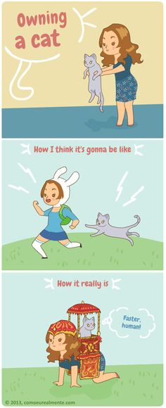 How I really... :: Owning a cat | Tapastic Comics
