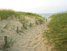 Decorating Green -Ideas Inspired by Beach Dune Grass