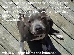"In the '70s they blamed Dobermans, in they '80s they blamed German Shepherds, in the '90s they blamed the Rottweiler. Now they blame the pit bull."" When will they blame the Humans? -Cesar Millan"