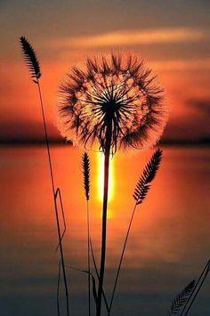 d385735e9 822 Best Cool Pics images