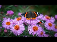 Your next Boca Raton home garden design should be a butterfly garden. A successful butterfly garden is full of color, fragrant flowers, and Home Garden Design, Diy Garden Decor, Amazing Gardens, Beautiful Gardens, Butterfly Pictures, Picture Search, Florida Home, Pictures Images, Vegetable Garden