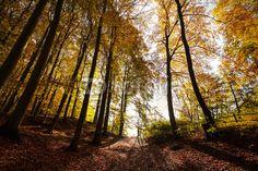 Mysterious autumn forest landscape.