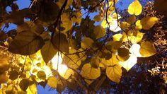Autumn. Güz.