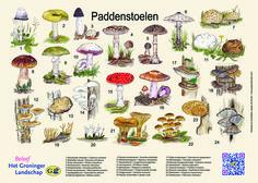 Paddenstoelenplacemat gemaakt in opdracht van Het Groninger Landschap, http://iturl.nl/snM98x