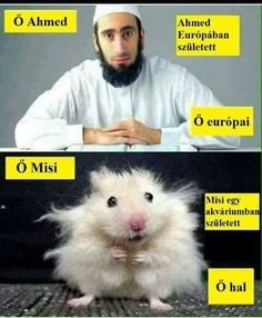 this-is-hasan-he-was-born-in-sweden-hasan-is-swedish-muslim-this-is-misho-he-was-born-in-an-aquarium-misho-is-a-fish-hamster-comparison-trolling.