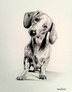 drawing sausage dogs - Google Search