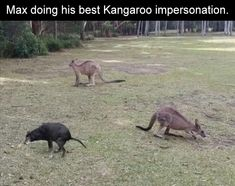 38 Funny Pictures - Death To Boredom Animal Captions, Funny Animals With Captions, Cute Animal Memes, Funny Captions, Funny Animal Videos, Cute Funny Animals, Funny Animal Pictures, Funny Cute, Animal Humor