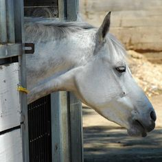 A stable for your horse is always nice to have.