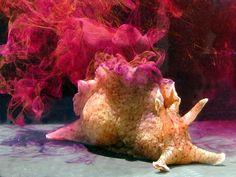 Sea Hare: When threatened, they squirt purple ink and milky white substance, called opaline, at the predator. The ink impairs their vision and the opaline restricts their sense of smell.