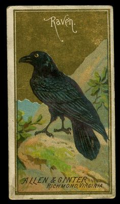 1888 Allen & Ginter Tobacco Trading Card