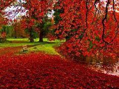 """Képtalálat a következőre: """"képguru ősz"""""""