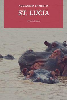 St. Lucia, waar de nijlpaarden door de stad lopen | Zuid-Afrika | nijlpaardencruise | Worldwife.nl Cities In Africa, Streets Have No Name, Hippopotamus, Ultimate Travel, Africa Travel, World Traveler, Continents, Trip Planning, Travel Guide