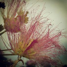 #usang Flower