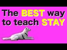 Training your dog to stay using this method incorporates many wonderful concepts into the training process: click as distractions happen you are using c. Dog Clicker Training, Dog Training Tips, Teach Dog Tricks, Rottweiler Training, Operant Conditioning, Dog Hacks, Dog Agility, Baby Puppies, Dog Boarding
