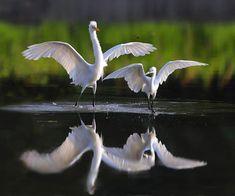 Wow. Beautiful.👌👌👏👏🙏🙏 Pretty Birds, Beautiful Birds, Animals Beautiful, Nature Animals, Animals And Pets, Cute Animals, Kinds Of Birds, All Birds, Amazing Animal Pictures