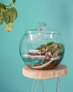 This Company Makes Incredible Micro Ecosystems In Pots And You Will Definitely Want One In Your Home Terrarium Plants, Succulent Terrarium, Terrarium Ideas, Glass Containers, Glass Jars, Ficus Pumila, Plants In Bottles, Interior Design Plants, Diy Garden Fountains