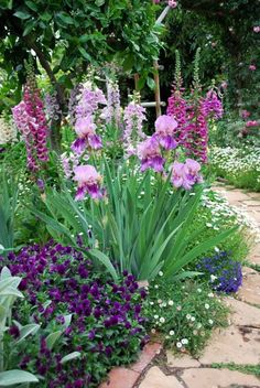 Pretty violet corner - viola, iris, erigeron, lobelia, and foxglove!
