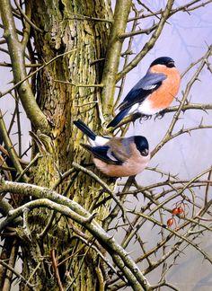 Wildlife Paintings, Wildlife Art, Mother Painting, Bird Artists, James Bond, Creation Photo, Bullfinch, Still Life Art, Bird Drawings
