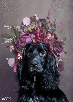 Floral Spaniel Pet Dogs, Dogs And Puppies, Dog Cat, Cute Puppies, Doggies, Animals And Pets, Baby Animals, Cute Animals, Beautiful Dogs