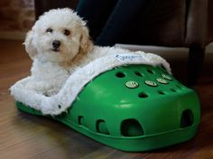 At first I thought this was weird but its kinda growing on me.    Personalized Bunga Beds for Pets -- LivingSocial Shop