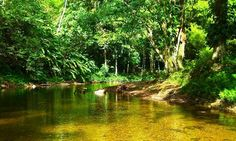 Caribbean Hiking in Trinidad on the Grande Riviere