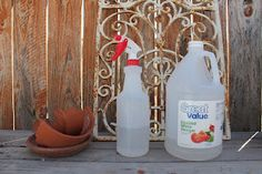 Can vinegar really kill weeds?