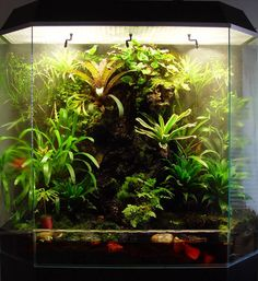 Cramer's Vivarium from the Netherlands