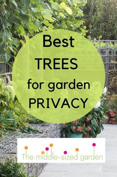 The 8 best perfect-for-privacy garden trees - The Middle-Sized Garden Ideas for garden privacy trees for your front garden or backyard. How to choose trees and design in privacy for your house or yard. Privacy Trees, Garden Privacy, Sloped Garden, Layout Design, Small Front Gardens, Baumgarten, Garden Trees, Garden Shrubs, Garden Pool
