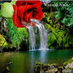Waterfall w a rose Rose Flower Wallpaper, Flowers Gif, Beautiful Rose Flowers, Beautiful Gif, Love Flowers, Roses Gif, Free To Use Images, Love Images, Love Pictures