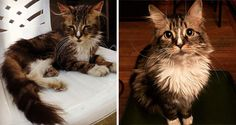 15before-and-after photos ofrescued animals that will put asmile onyour face