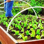 Links on how to build raised gardens plus how to maximize production in cramped space.