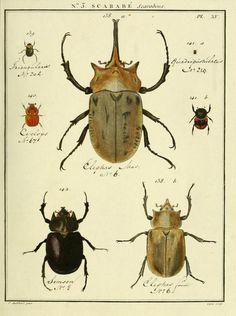 t. 7 - Entomologie, ou, Histoire naturelle des insectes : - Biodiversity Heritage Library