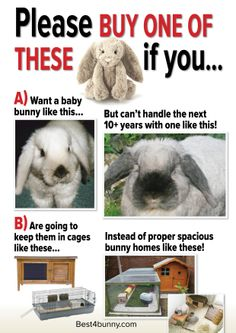 To people who are not prepared to look after a bunny properly!....and if you live in mn please house your bunny indoors