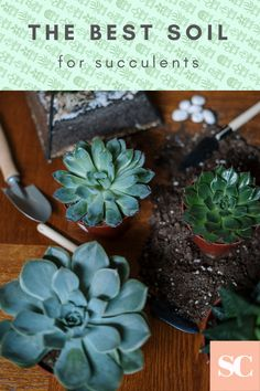 First of all – what is soil drainage? Simply put, it's how fast water leaves the soil. After you water a plant, some of that water should come out of the bottom of the pot, but most of it will stay in the soil. That water either has to be taken up by the plant or evaporated into the air. #succulents #succucity #succulentcity #succulentsoil