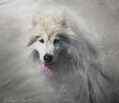 Brandon White Dog. - http://www.1pic4u.com/blog/2014/09/30/brandon-white-dog/