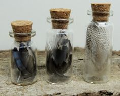Sarah---- Feather Collection ~ Blue Jay / Starling / Guinea ~ Natural History Collection ~Curiosity Cabinet