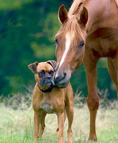 10 Adorable Pictures of Dogs & Horses « HORSE NATION. Click on the link, the pix are great.