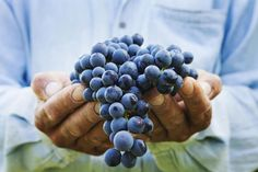 A compound found in grapes and red wine, resveratrol may help keep your blood sugar in check and stave off diabetes. Green Grapes Nutrition, Spinach Nutrition Facts, How To Make Purple, Nutrition And Mental Health, Blackberry Nutrition, Purple Dye, Purple Fabric, Precision Nutrition, Holistic Nutritionist