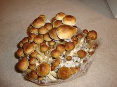"""Another new study about Magic Mushrooms! Scientists have found that a naturally occurring compound present in """"shrooms"""" (psilocybin), stimulates new brain cell growth and erases frightening memories."""