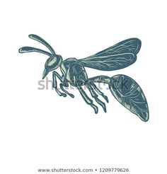 Scratchboard style illustration of a wasp, yellowjacket or hornet flying viewed from side done on scraperboard on isolated background. Scratchboard, Bugs And Insects, Wasp, Hornet, Royalty Free Stock Photos, Illustration, Pictures, Image, Style