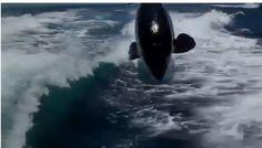 Tekne Kovalayan Katil Balinalar (ORCA)
