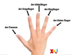 die Hand - Die Namen von den Fingern / the Hand - Names of the Fingers Study German, Learn German, Learn English, Learn French, German Grammar, German Words, German Language Learning, Learning Spanish, Learning Italian