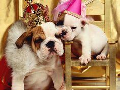 #Bulldogs #Royalty
