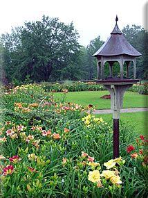 CAROLINA DAYLILIES... Columbia, Lexington, & South Carolina Daylilies