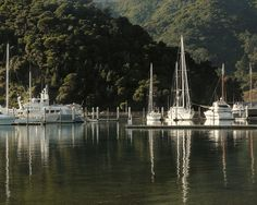 Picton Marina view on a sunny winter morning. Marlborough Sounds, San Francisco Skyline, New Zealand, Natural Beauty, River, Nature, Pictures, Outdoor, Beautiful