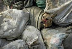 These bags are filled with stray dogs and cats that will be burnt alive in order to get them off the streets in time for the European Football Championship 2012 that is being held in Ukraine. Please raise awareness!