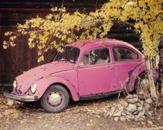 Pretty in Pink  VW Beetle Photo  Vintage VW by dreamcaptures